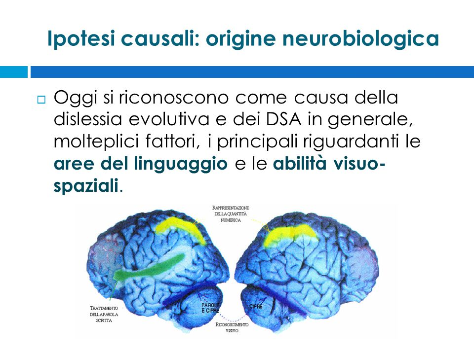Ipotesi causali: origine neurobiologica  Oggi si riconoscono come causa della dislessia evolutiva e dei DSA in generale, molteplici fattori, i principali riguardanti le aree del linguaggio e le abilità visuo- spaziali.