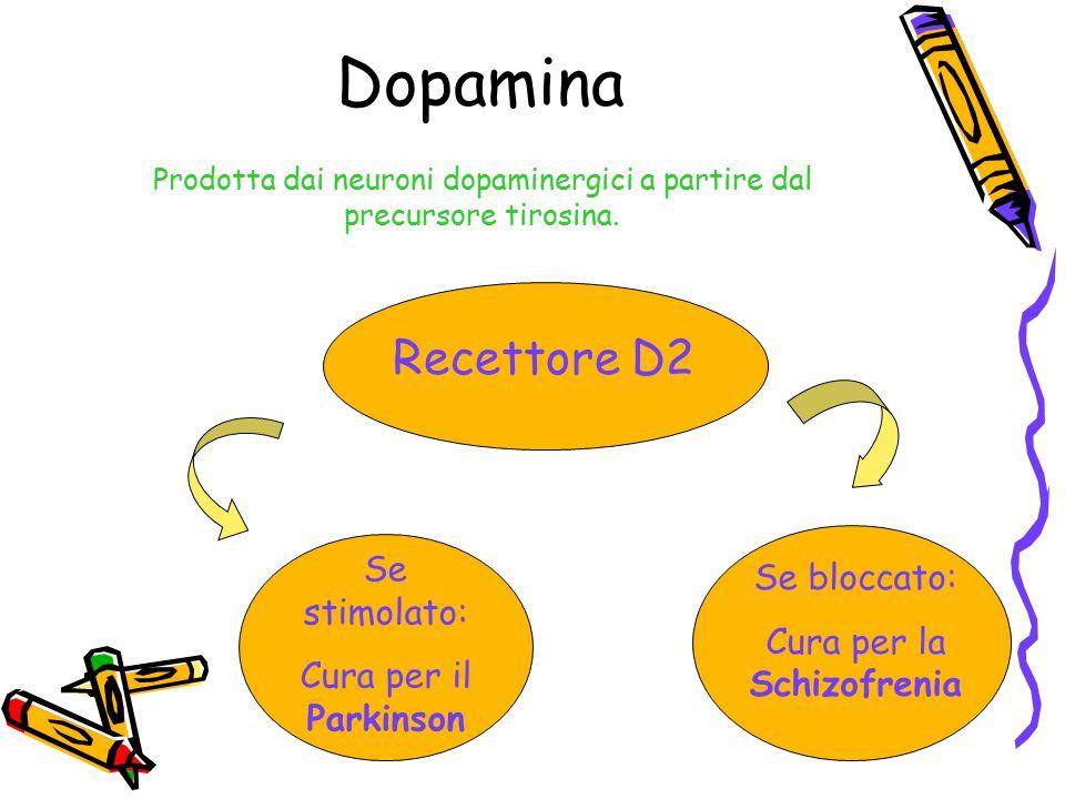 Dopamina Prodotta dai neuroni dopaminergici a partire dal precursore tirosina. Recettore D2 Se stimolato: Cura per il Parkinson Se bloccato: Cura per