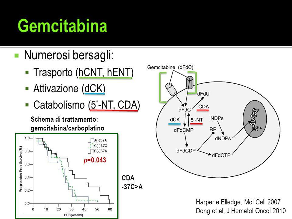  Numerosi bersagli:  Trasporto (hCNT, hENT)  Attivazione (dCK)  Catabolismo (5'-NT, CDA) Harper e Elledge, Mol Cell 2007 Dong et al, J Hematol Onc