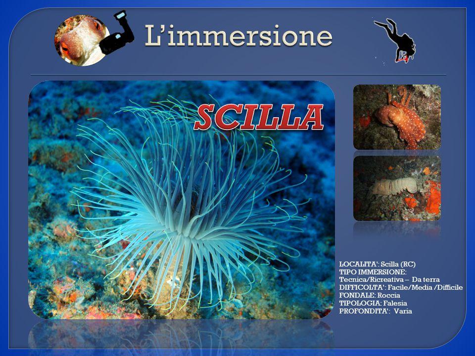 LOCALITA': Scilla (RC) TIPO IMMERSIONE: Tecnica/Ricreativa – Da terra DIFFICOLTA': Facile/Media /Difficile FONDALE: Roccia TIPOLOGIA: Falesia PROFONDI