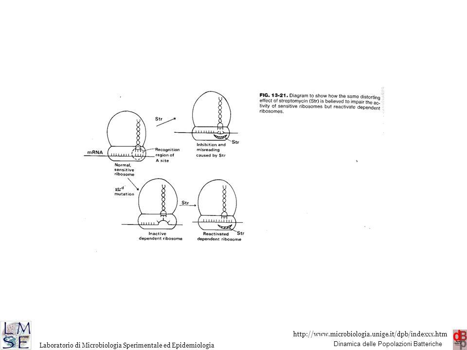 http://www.microbiologia.unige.it/dpb/indexxx.htm Dinamica delle Popolazioni Batteriche Laboratorio di Microbiologia Sperimentale ed Epidemiologia Gli aminoglicosidi possono causare nefro e ototossicità.