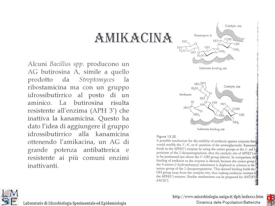 http://www.microbiologia.unige.it/dpb/indexxx.htm Dinamica delle Popolazioni Batteriche Laboratorio di Microbiologia Sperimentale ed Epidemiologia AMINOGLICOSIDI ENZIMI INATTIVANTI Al contrario di quanto avviene con i β-lattamici ove esiste un solo tipo di inattivazione della molecola, idrolisi dell'anello β-lattamico, esistono almeno 12 tipi di alterazioni sulla molecola degli AG, se poi si considera che spesso gli enzimi responsabili hanno in genere isoenzimi il numero delle possibili alterazioni aumenta ancora.