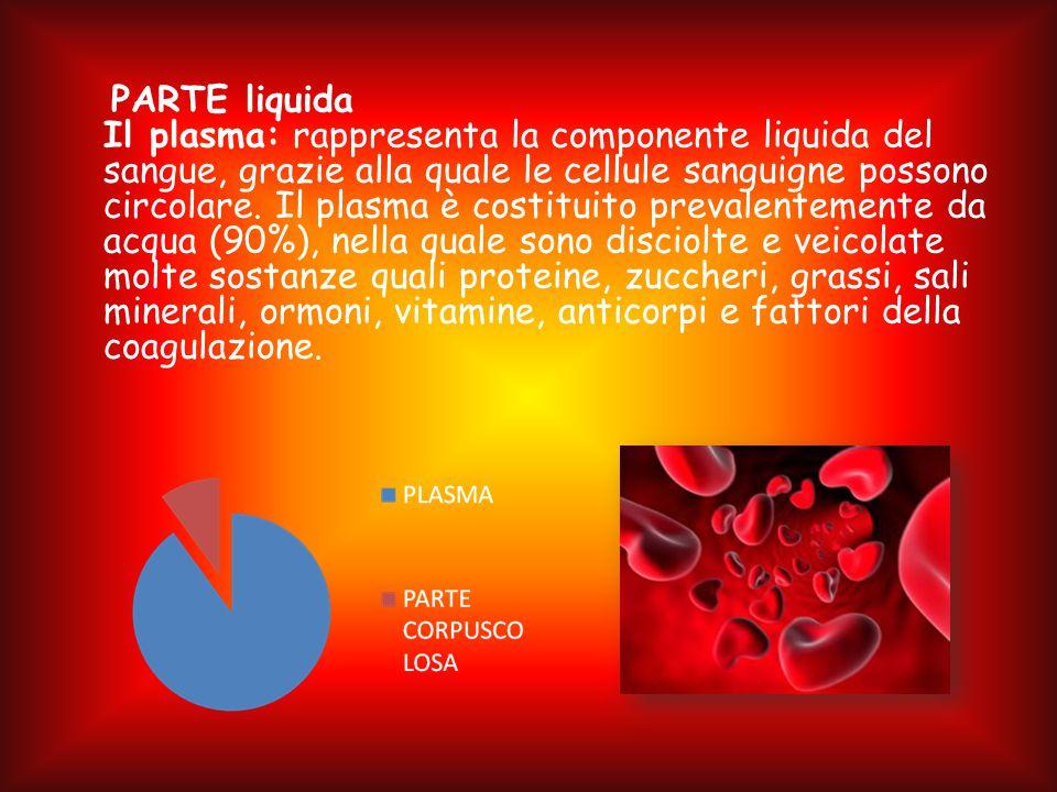 PARTE liquida Il plasma: rappresenta la componente liquida del sangue, grazie alla quale le cellule sanguigne possono circolare. Il plasma è costituit