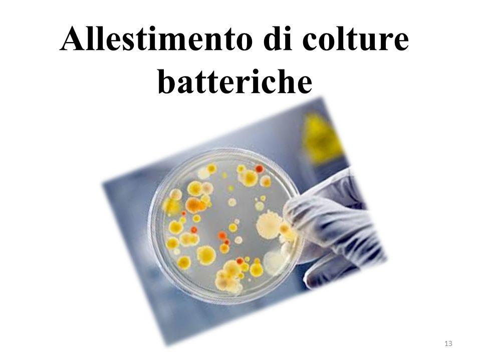 13 Allestimento di colture batteriche