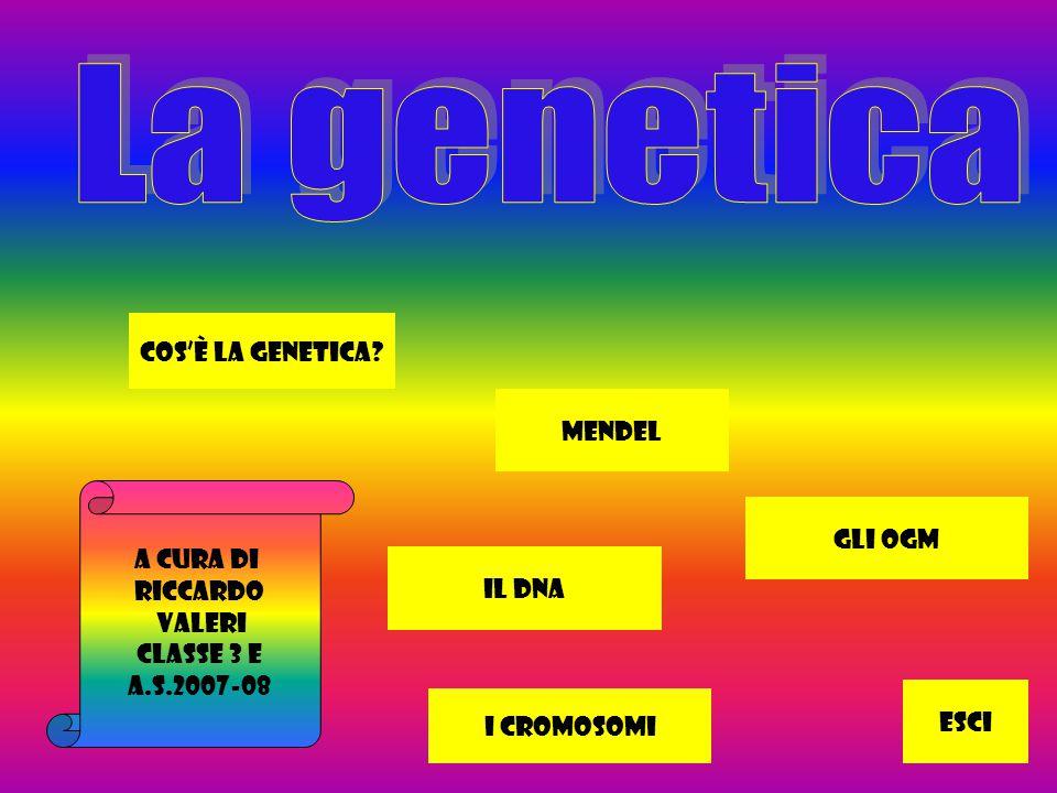 A cura di Riccardo Valeri Classe 3 E a.s.2007-08 Cos'è la genetica.