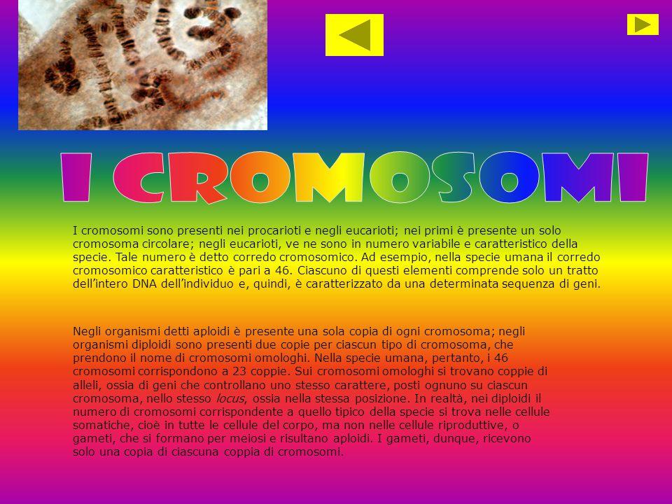 I cromosomi sono presenti nei procarioti e negli eucarioti; nei primi è presente un solo cromosoma circolare; negli eucarioti, ve ne sono in numero va