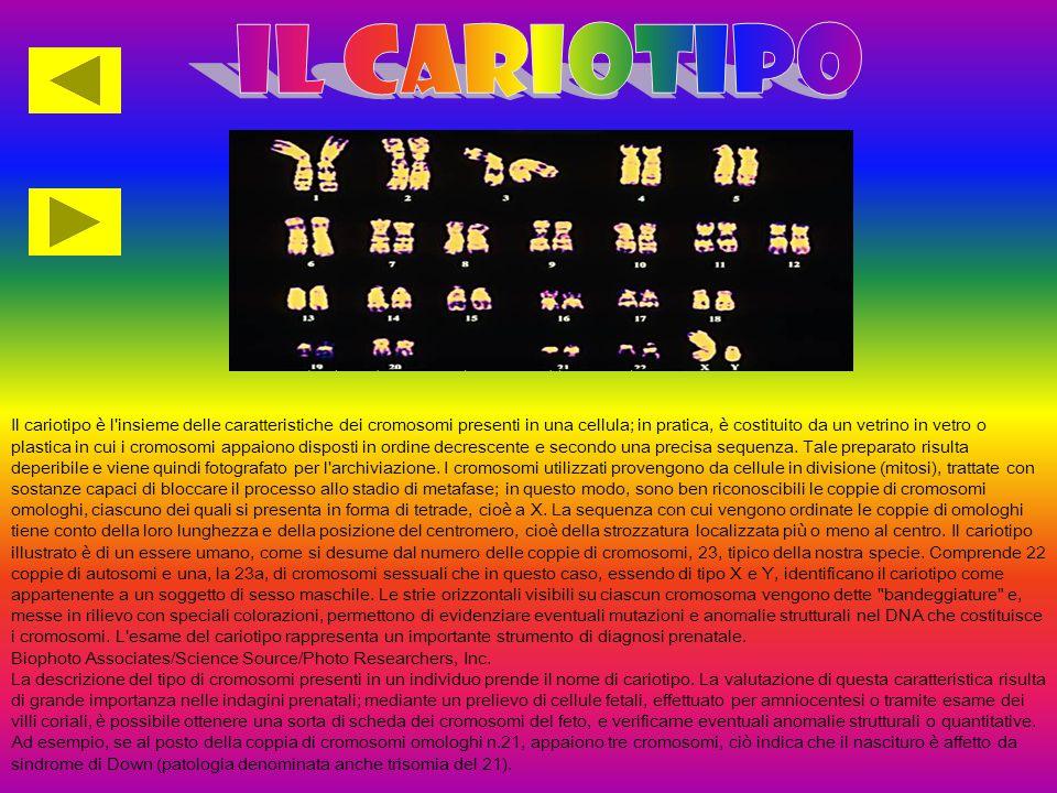 Il cariotipo è l insieme delle caratteristiche dei cromosomi presenti in una cellula; in pratica, è costituito da un vetrino in vetro o plastica in cui i cromosomi appaiono disposti in ordine decrescente e secondo una precisa sequenza.