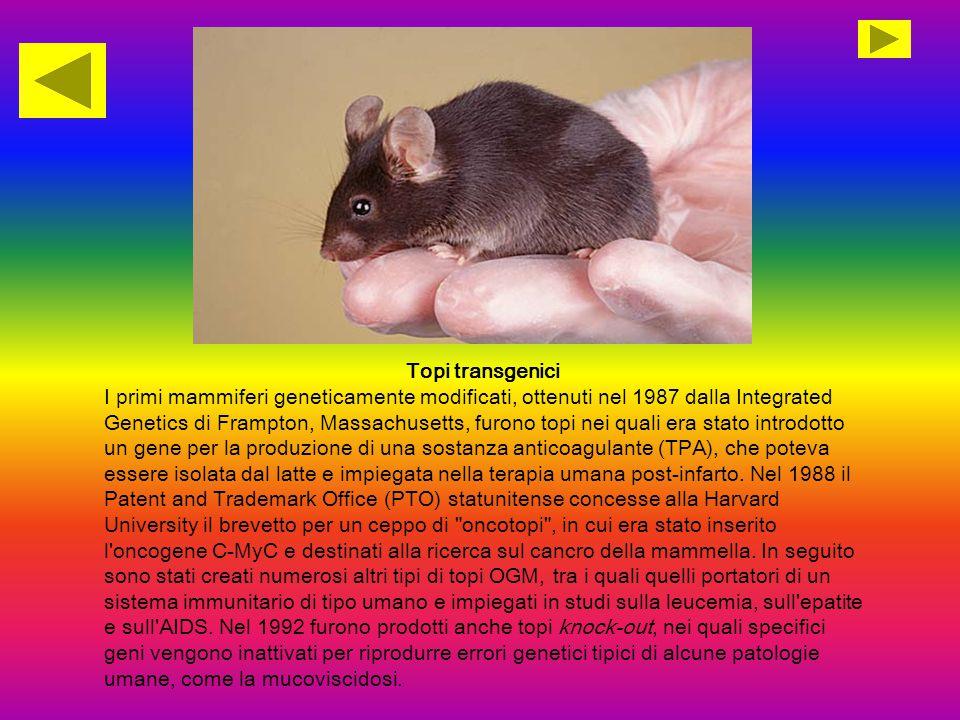 Topi transgenici I primi mammiferi geneticamente modificati, ottenuti nel 1987 dalla Integrated Genetics di Frampton, Massachusetts, furono topi nei q