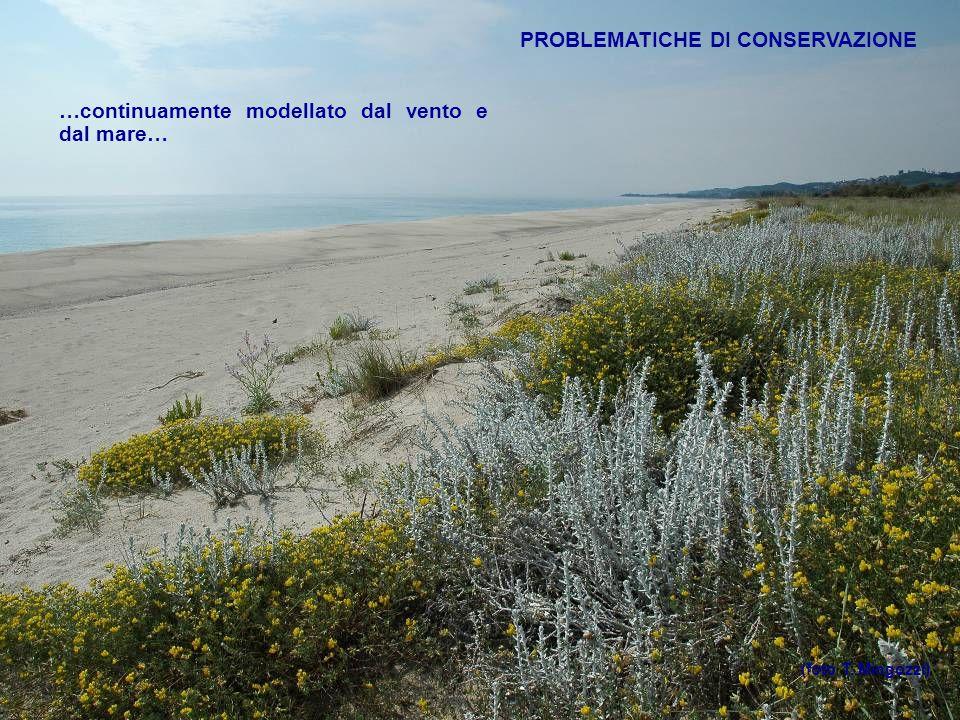PROBLEMATICHE DI CONSERVAZIONE …continuamente modellato dal vento e dal mare… (foto T. Mingozzi)