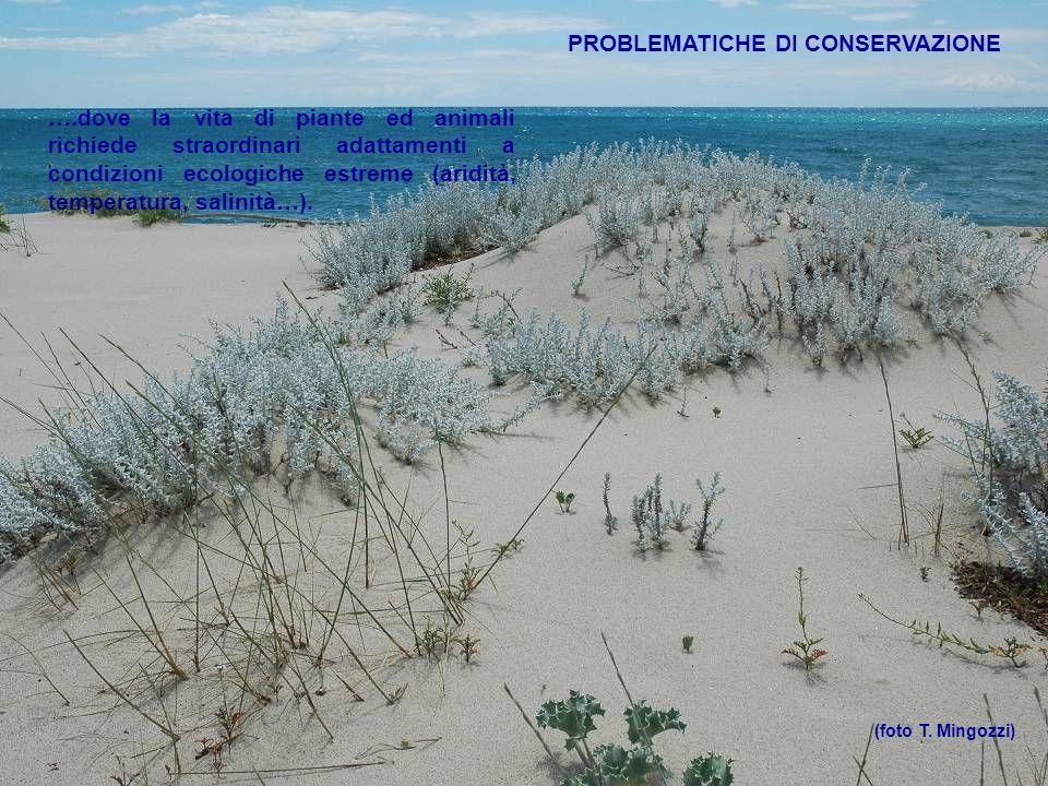 ….dove la vita di piante ed animali richiede straordinari adattamenti a condizioni ecologiche estreme (aridità, temperatura, salinità…). (foto T. Ming