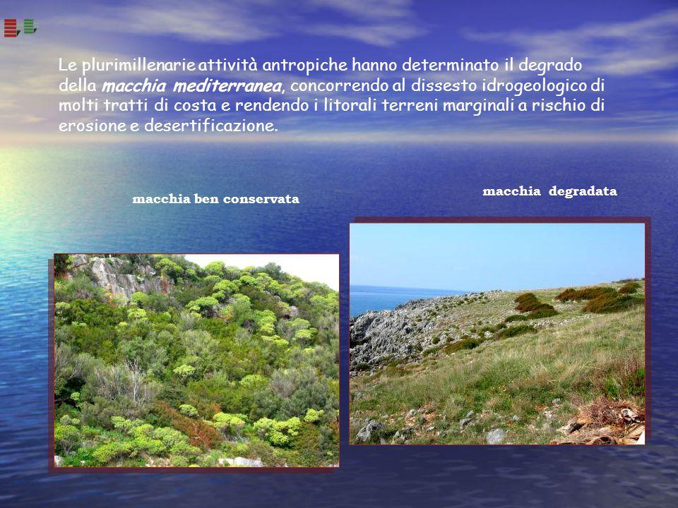 Le plurimillenarie attività antropiche hanno determinato il degrado della macchia mediterranea, concorrendo al dissesto idrogeologico di molti tratti