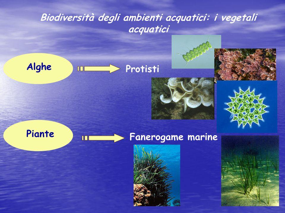 Alghe Planctoniche (forme galleggianti ) diatomee cloroficee crisoficee Biodiversità degli ambienti acquatici: i vegetali acquatici
