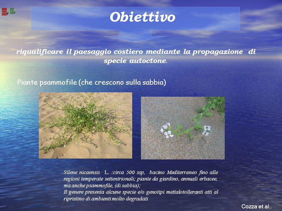 Obiettivo riqualificare il paesaggio costiero mediante la propagazione di specie autoctone. Silene nicaensis L. :circa 500 ssp, bacino Mediterraneo fi