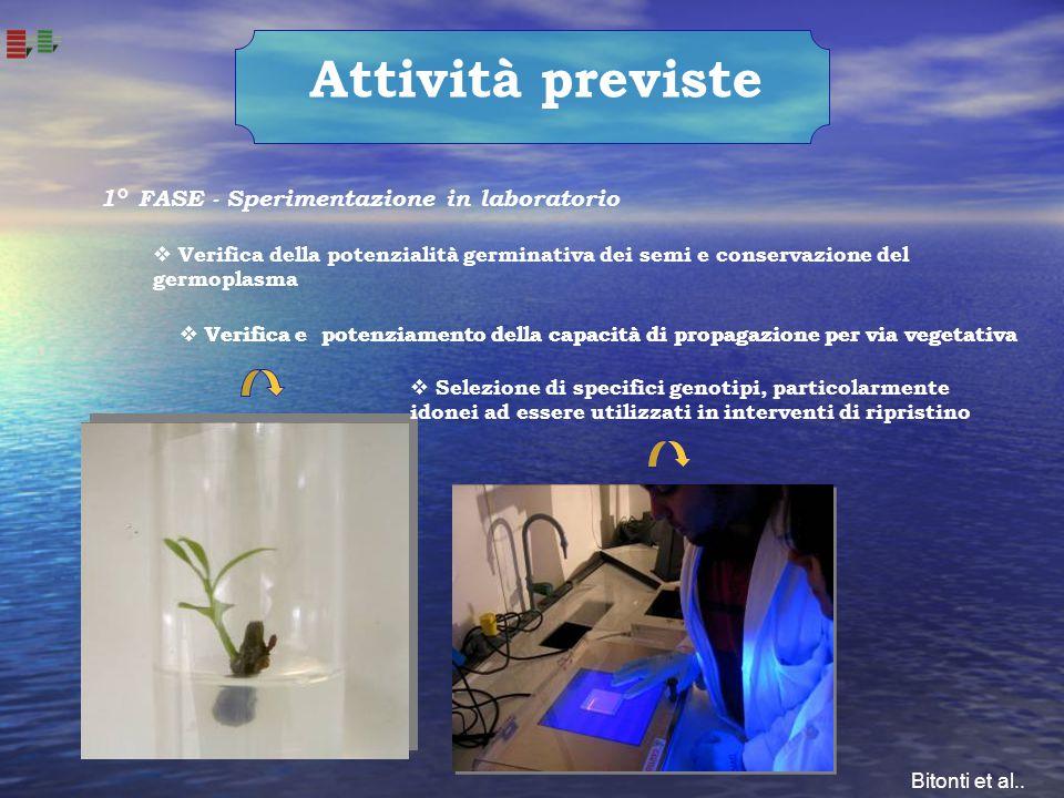 1° FASE - Sperimentazione in laboratorio Attività previste  Verifica e potenziamento della capacità di propagazione per via vegetativa  Verifica del