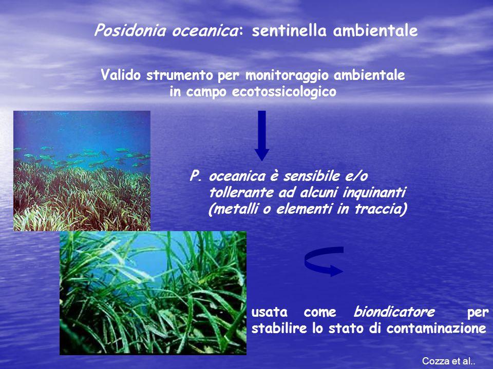 Valido strumento per monitoraggio ambientale in campo ecotossicologico Posidonia oceanica: sentinella ambientale P. oceanica è sensibile e/o tollerant