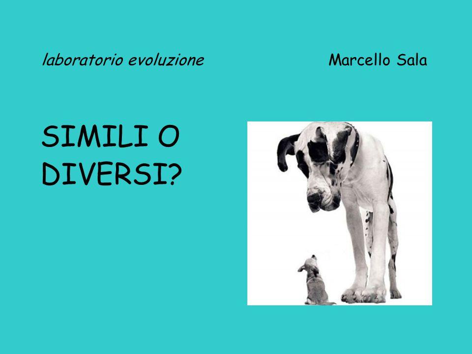 laboratorio evoluzione Marcello Sala SIMILI O DIVERSI?