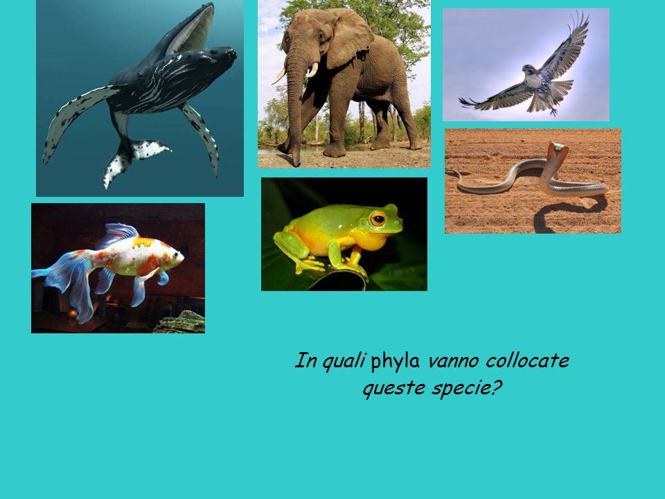 In quali phyla vanno collocate queste specie?