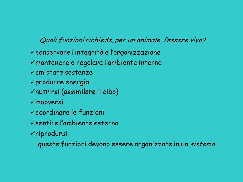 Quali funzioni richiede, per un animale, l'essere vivo? conservare l'integrità e l'organizzazione mantenere e regolare l'ambiente interno smistare sos