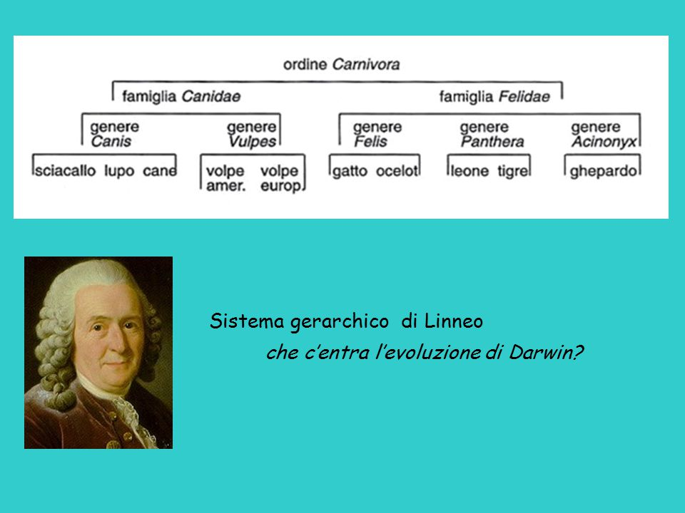 Sistema gerarchico di Linneo che c'entra l'evoluzione di Darwin?