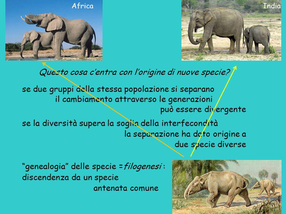 Questo cosa c'entra con l'origine di nuove specie? se due gruppi della stessa popolazione si separano il cambiamento attraverso le generazioni può ess