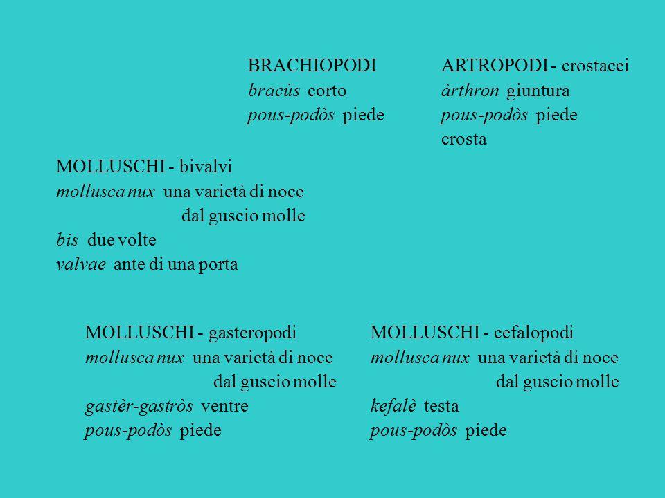 ARTROPODI - crostacei àrthron giuntura pous-podòs piede crosta BRACHIOPODI bracùs corto pous-podòs piede MOLLUSCHI - bivalvi mollusca nux una varietà