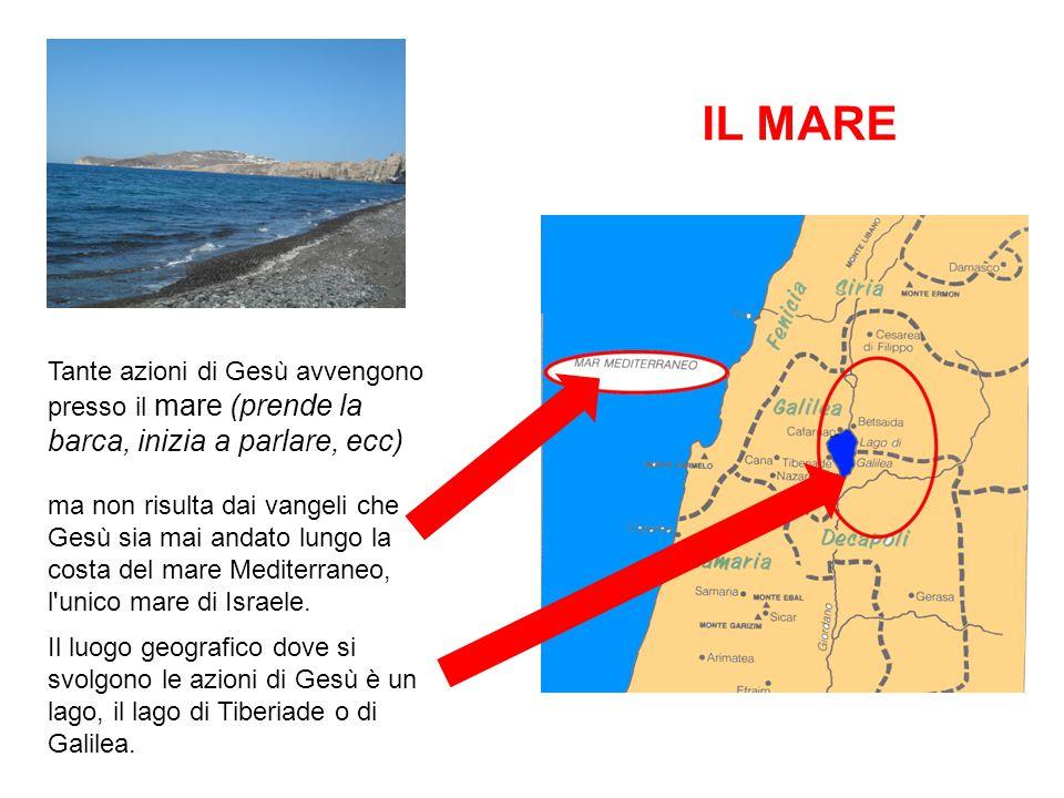 IL MARE Tante azioni di Gesù avvengono presso il mare (prende la barca, inizia a parlare, ecc) ma non risulta dai vangeli che Gesù sia mai andato lungo la costa del mare Mediterraneo, l unico mare di Israele.