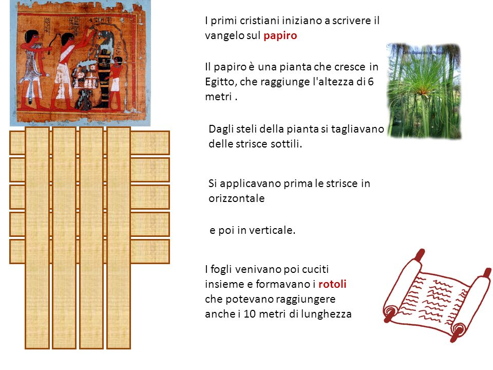 I primi cristiani iniziano a scrivere il vangelo sul papiro Il papiro è una pianta che cresce in Egitto, che raggiunge l altezza di 6 metri.