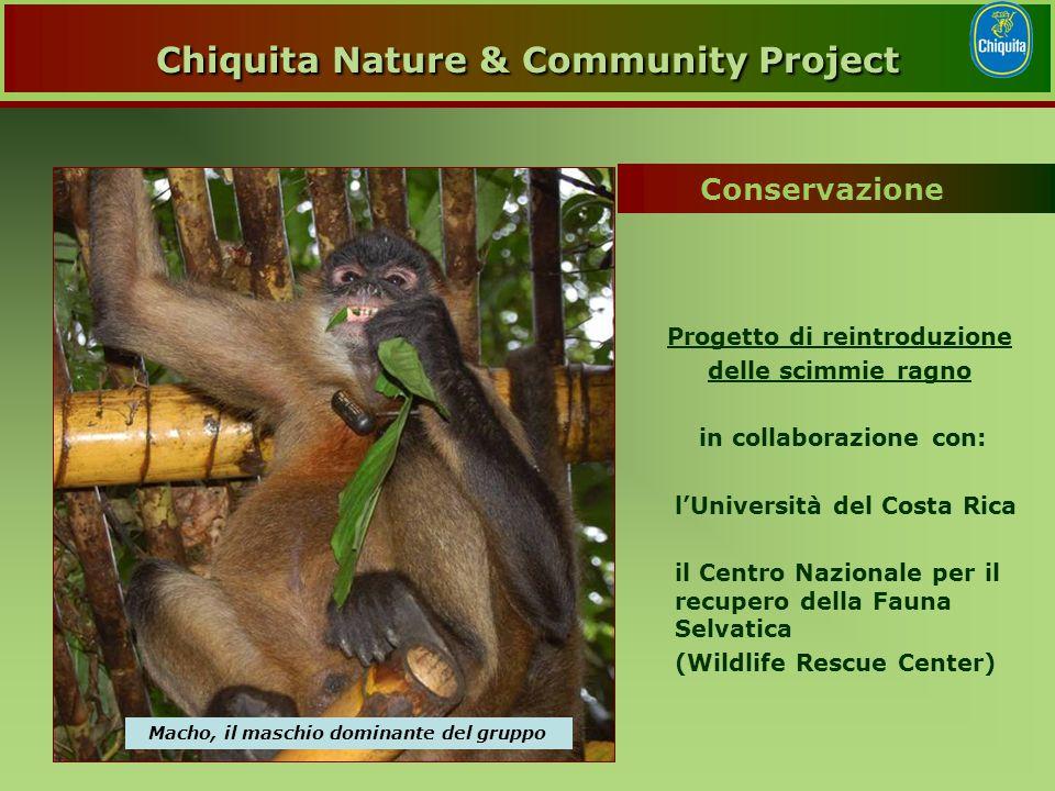 Progetto di reintroduzione delle scimmie ragno in collaborazione con: l'Università del Costa Rica il Centro Nazionale per il recupero della Fauna Selvatica (Wildlife Rescue Center) Macho, il maschio dominante del gruppo Conservazione Chiquita Nature & Community Project