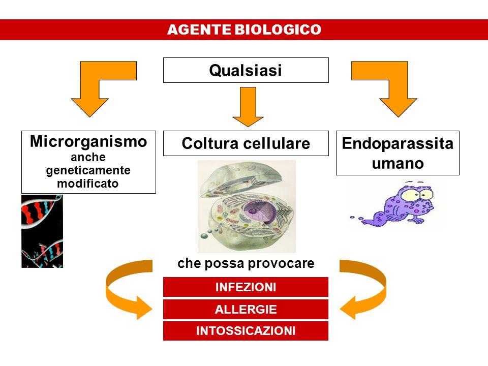 Microrganismo anche geneticamente modificato Coltura cellulareEndoparassita umano INFEZIONI ALLERGIE INTOSSICAZIONI che possa provocare Qualsiasi AGENTE BIOLOGICO