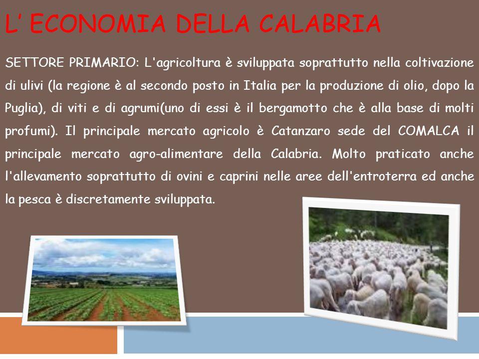 L' ECONOMIA DELLA CALABRIA SETTORE PRIMARIO: L agricoltura è sviluppata soprattutto nella coltivazione di ulivi (la regione è al secondo posto in Italia per la produzione di olio, dopo la Puglia), di viti e di agrumi(uno di essi è il bergamotto che è alla base di molti profumi).