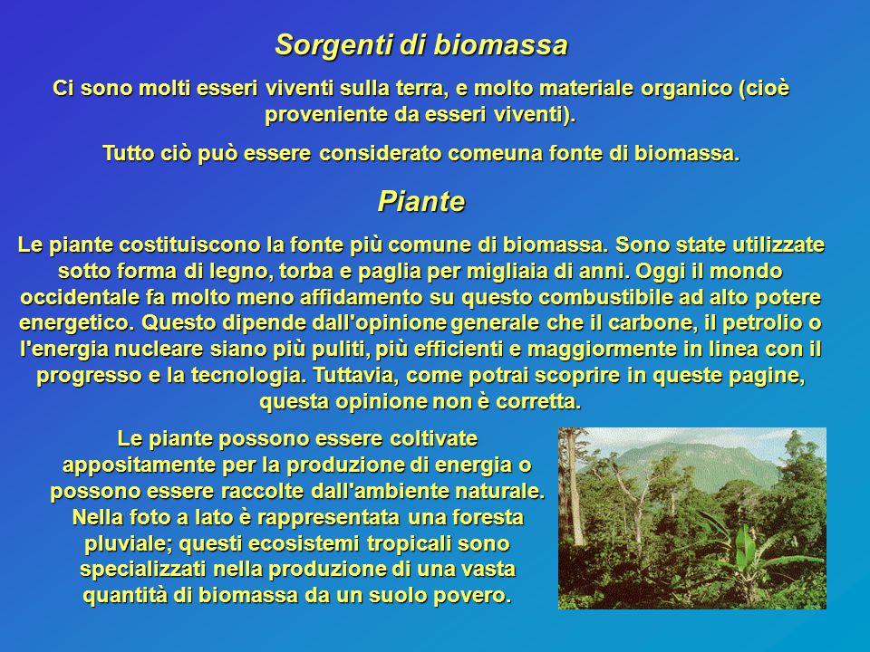 Sorgenti di biomassa Ci sono molti esseri viventi sulla terra, e molto materiale organico (cioè proveniente da esseri viventi). Tutto ciò può essere c