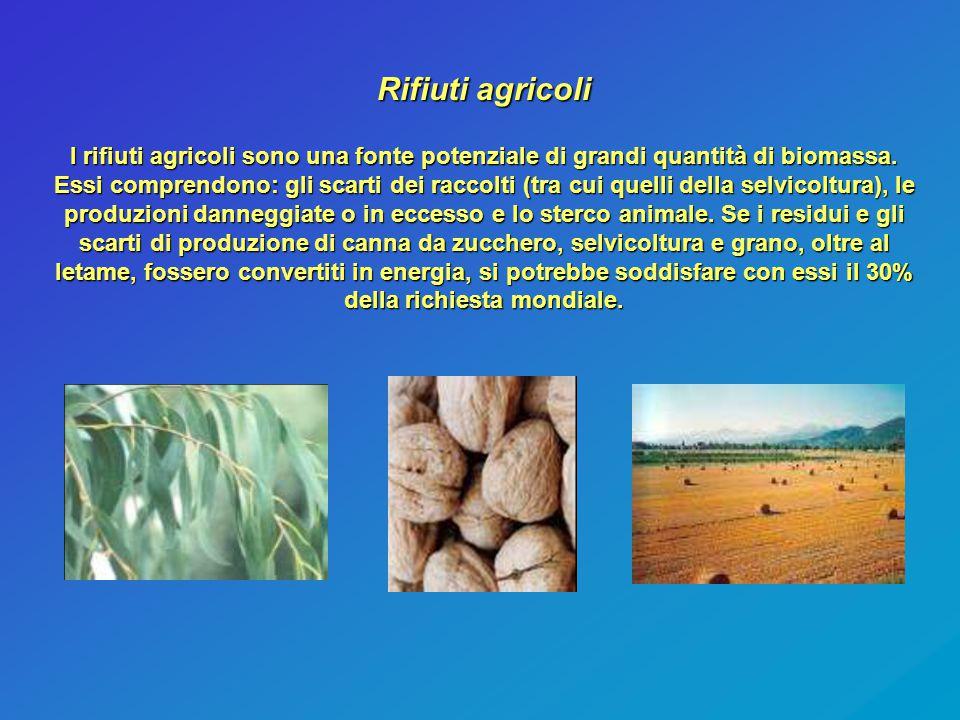 Rifiuti agricoli I rifiuti agricoli sono una fonte potenziale di grandi quantità di biomassa. Essi comprendono: gli scarti dei raccolti (tra cui quell