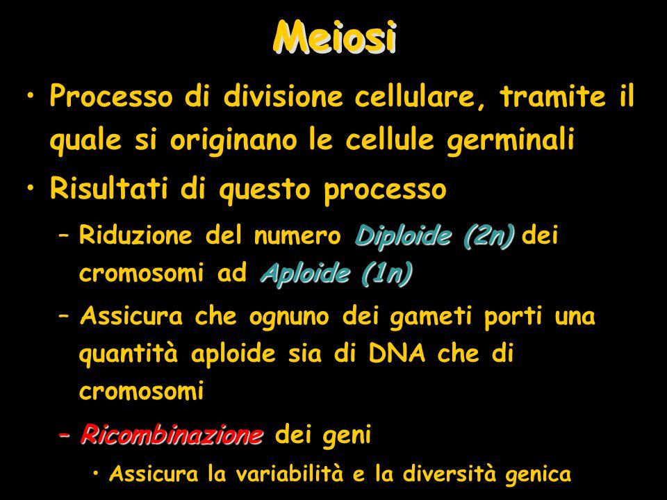 Meiosi Processo di divisione cellulare, tramite il quale si originano le cellule germinali Risultati di questo processo Diploide (2n) Aploide (1n) –Ri