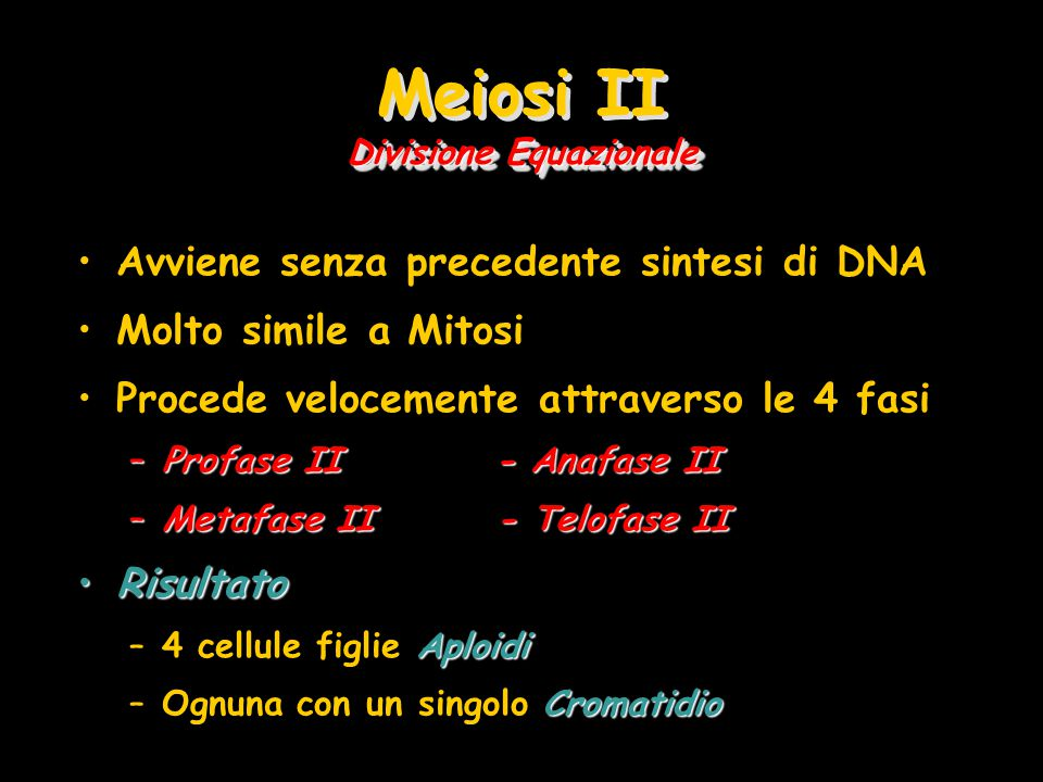 Divisione Equazionale Meiosi II Divisione Equazionale Avviene senza precedente sintesi di DNA Molto simile a Mitosi Procede velocemente attraverso le