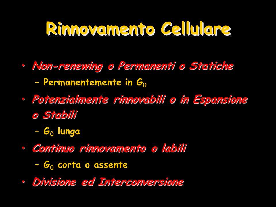 Rinnovamento Cellulare Non-renewing o Permanenti o StaticheNon-renewing o Permanenti o Statiche –Permanentemente in G 0 Potenzialmente rinnovabili o i