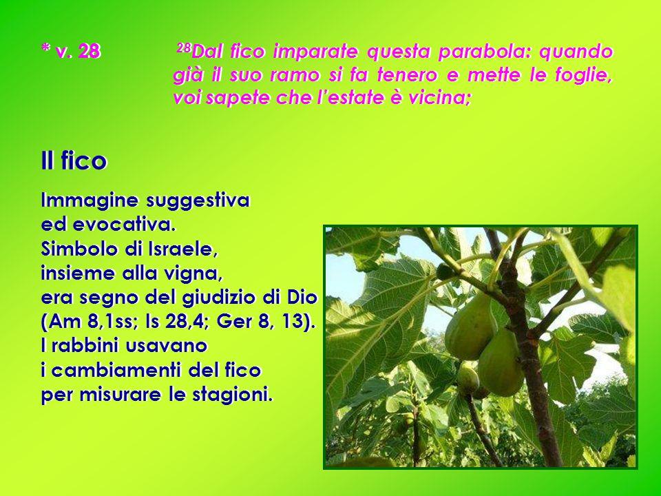 * v. 28 28 Dal fico imparate questa parabola: quando già il suo ramo si fa tenero e mette le foglie, voi sapete che l'estate è vicina; Il fico Immagin