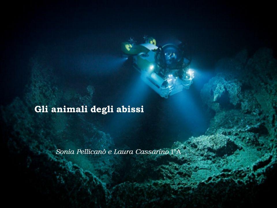 Gli animali degli abissi Sonia Pellicanò e Laura Cassarino I°A
