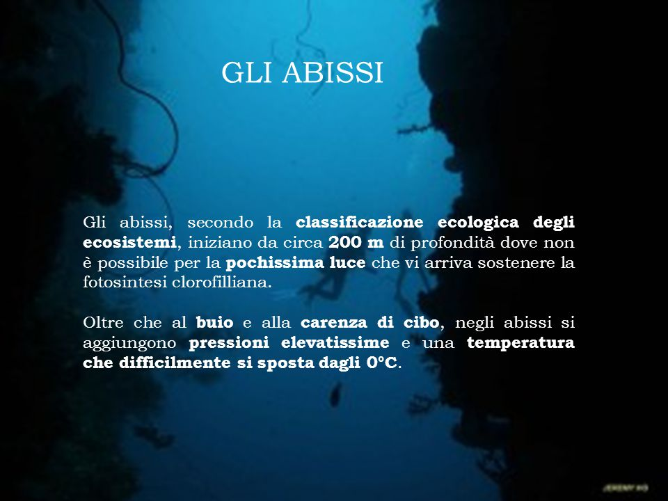 Gli abissi, secondo la classificazione ecologica degli ecosistemi, iniziano da circa 200 m di profondità dove non è possibile per la pochissima luce c