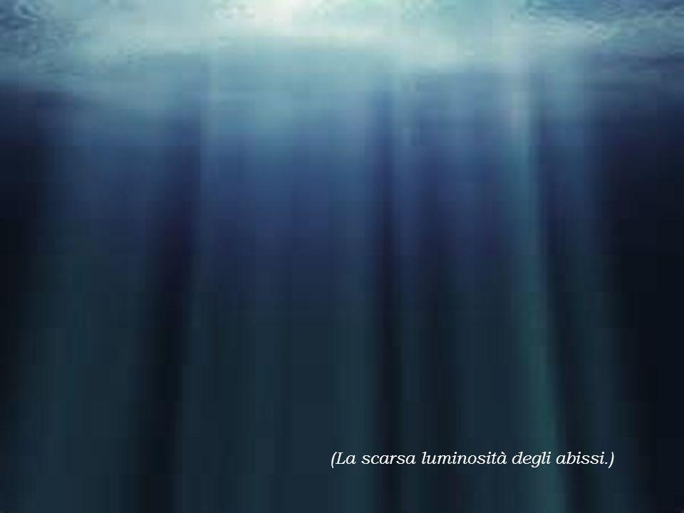 Il cibo è molto scarso negli abissi per questo i pesci devono sfruttare ogni occasione per nutrirsi.