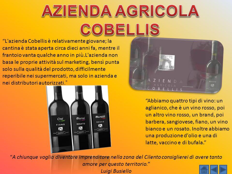 """""""L'azienda Cobellis è relativamente giovane; la cantina è stata aperta circa dieci anni fa, mentre il frantoio vanta qualche anno in più.L'azienda non"""