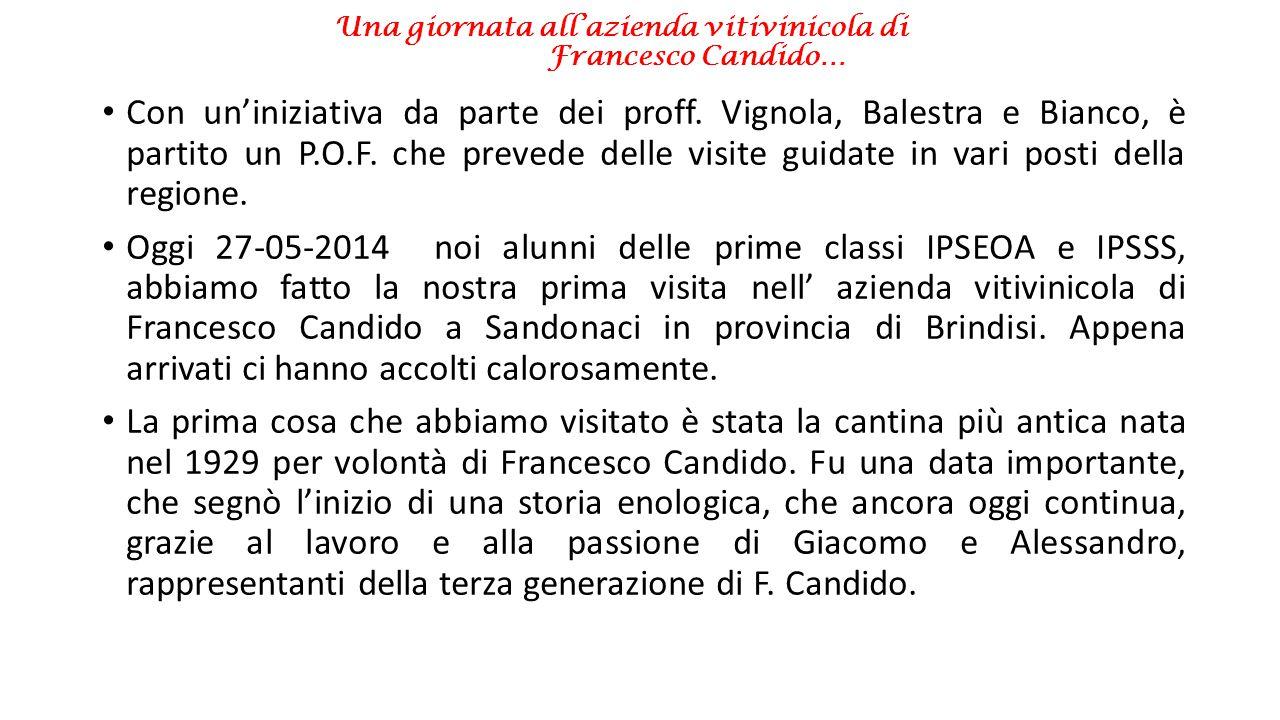 Una giornata all'azienda vitivinicola di Francesco Candido… Con un'iniziativa da parte dei proff. Vignola, Balestra e Bianco, è partito un P.O.F. che
