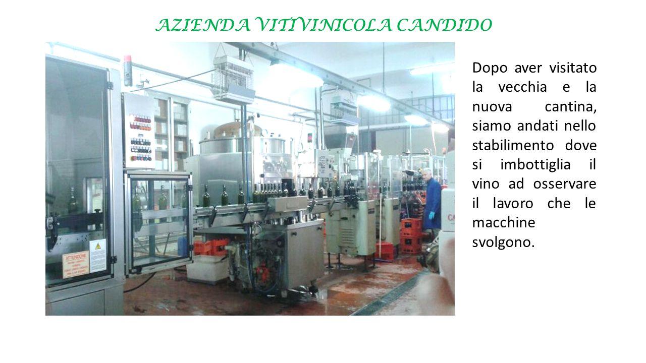 AZIENDA VITIVINICOLA CANDIDO Dopo aver visitato la vecchia e la nuova cantina, siamo andati nello stabilimento dove si imbottiglia il vino ad osservare il lavoro che le macchine svolgono.