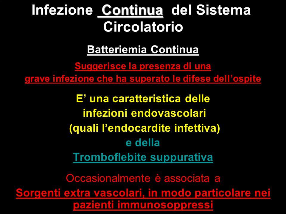 Batteriemia Continua Suggerisce la presenza di una grave infezione che ha superato le difese dell'ospite E' una caratteristica delle infezioni endovas