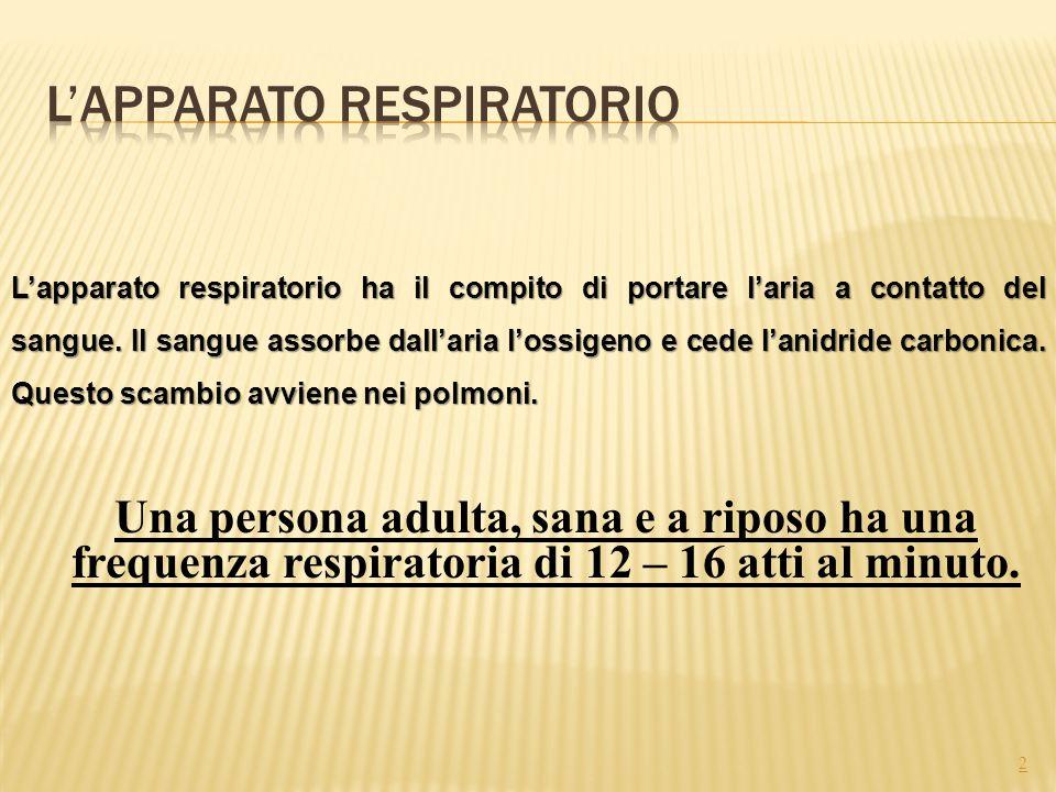 2 L'apparato respiratorio ha il compito di portare l'aria a contatto del sangue. Il sangue assorbe dall'aria l'ossigeno e cede l'anidride carbonica. Q