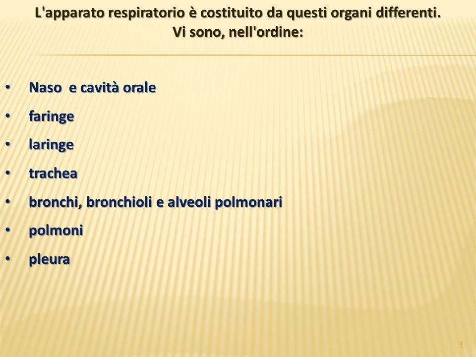 4 Naso e cavità orale Naso e cavità orale faringe faringe laringe laringe trachea trachea bronchi, bronchioli e alveoli polmonari bronchi, bronchioli