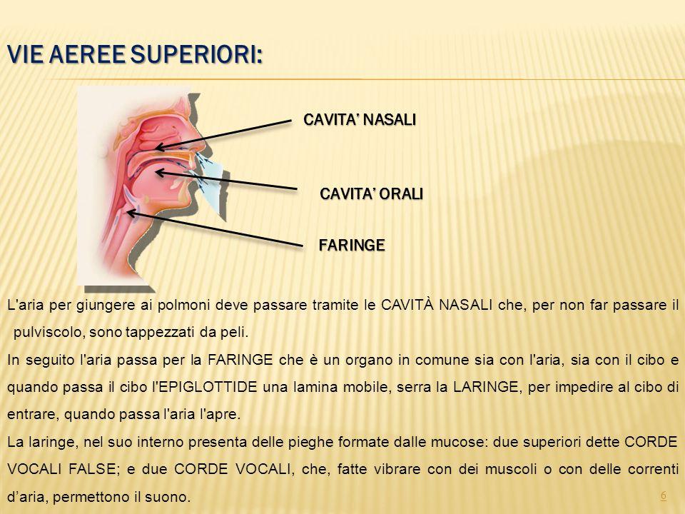VIE AEREE SUPERIORI: 6 CAVITA' NASALI FARINGE CAVITA' ORALI L'aria per giungere ai polmoni deve passare tramite le CAVITÀ NASALI che, per non far pass