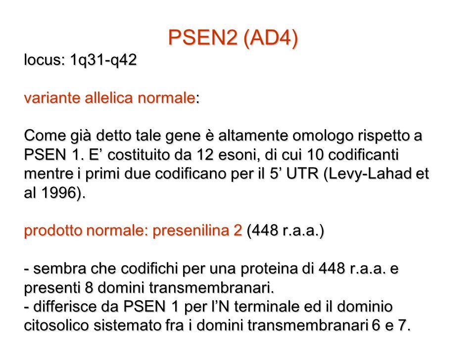 PSEN2 (AD4) locus: 1q31-q42 variante allelica normale: Come già detto tale gene è altamente omologo rispetto a PSEN 1. E' costituito da 12 esoni, di c