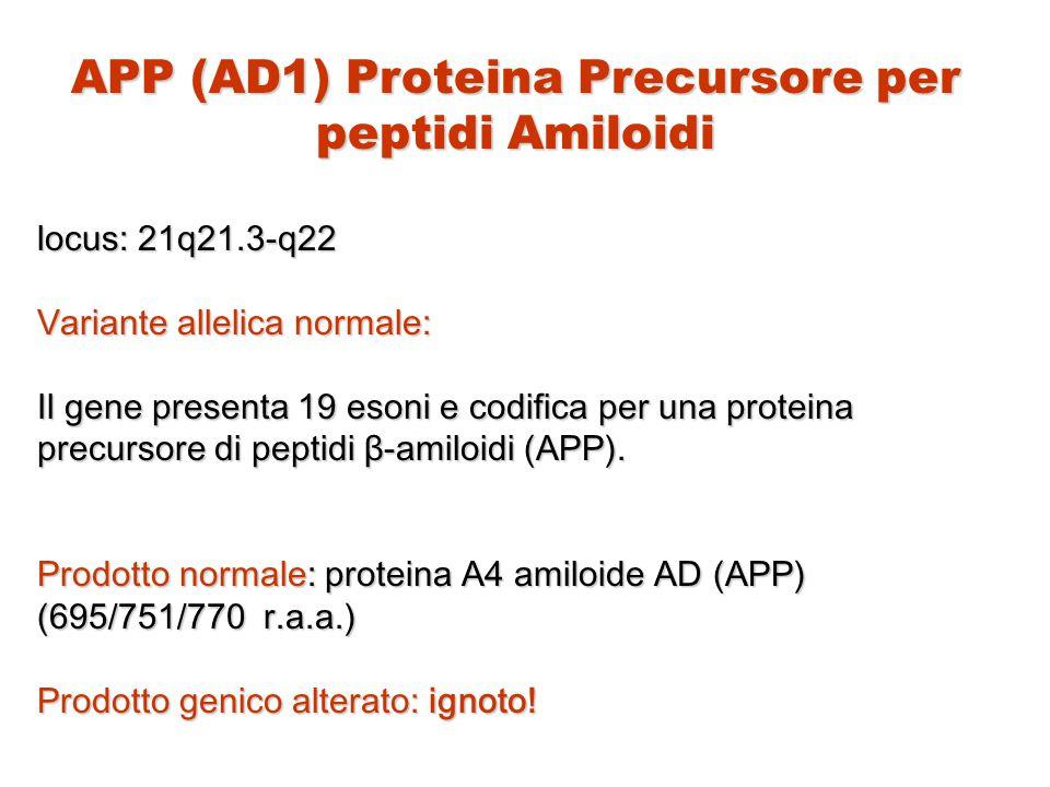 APP (AD1) Proteina Precursore per peptidi Amiloidi locus: 21q21.3-q22 Variante allelica normale: Il gene presenta 19 esoni e codifica per una proteina