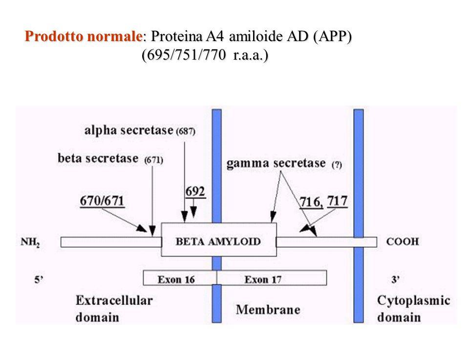 Prodotto normale: Proteina A4 amiloide AD (APP) (695/751/770 r.a.a.) (695/751/770 r.a.a.)