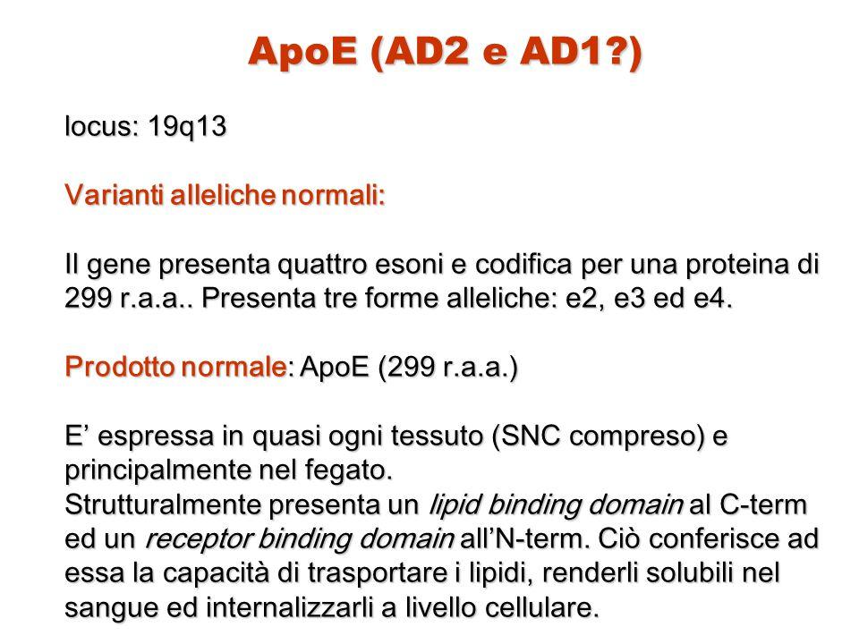 ApoE (AD2 e AD1?) locus: 19q13 Varianti alleliche normali: Il gene presenta quattro esoni e codifica per una proteina di 299 r.a.a.. Presenta tre form